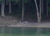 Trash on Mountain Island Lakeshores
