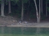 Trash on Mountain Island Lake shores